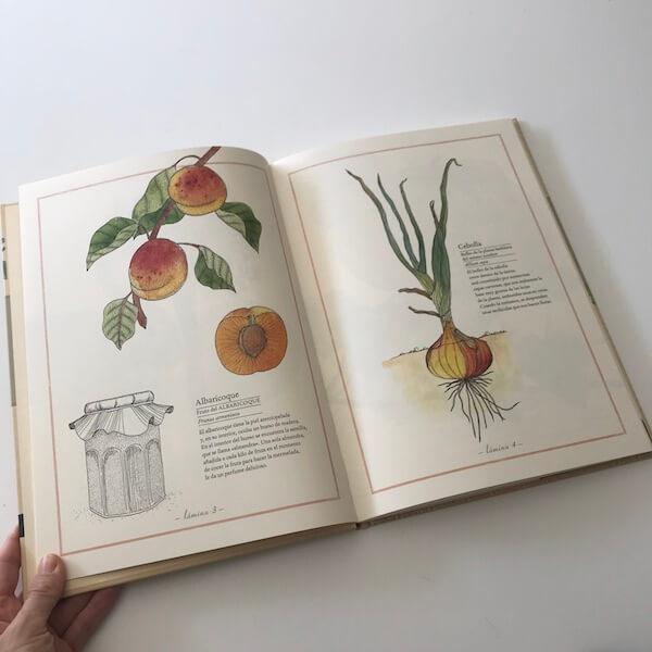 Inventario ilustrado de frutas y verduras Kalandraka (1)