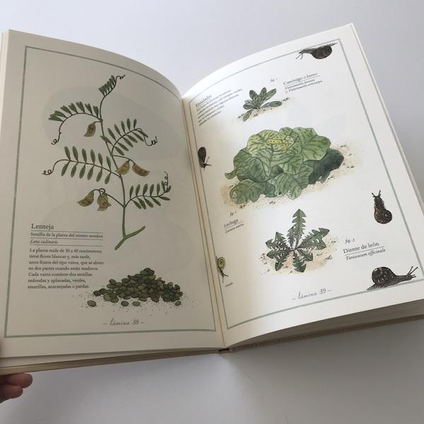 Inventario ilustrado de frutas y verduras Kalandraka (2)